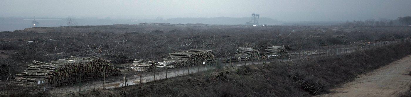 Hambacher Forst, eine forensische Bestandsaufnahme